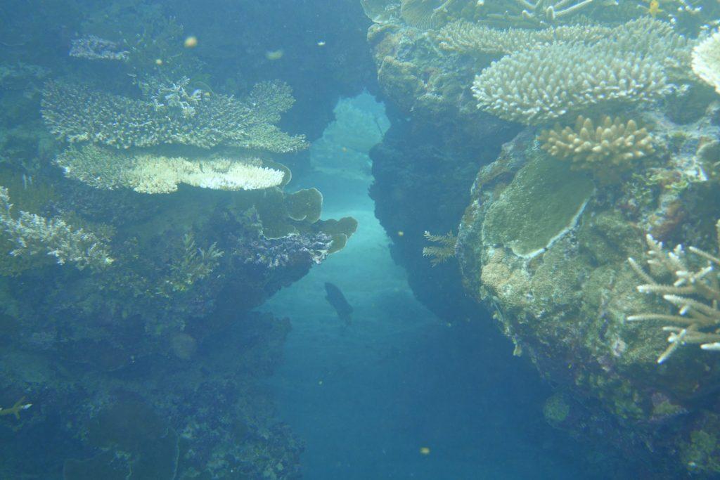 PALAU | Blue Marlin